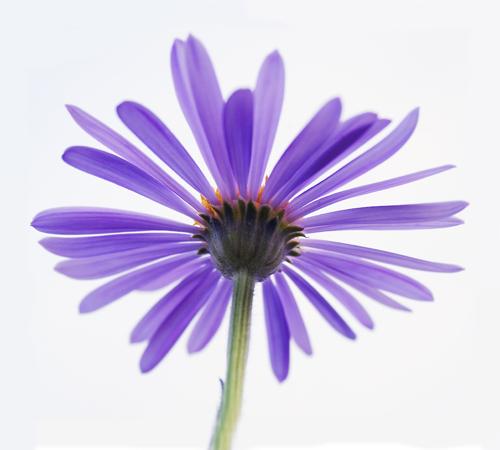 kvetinka_small